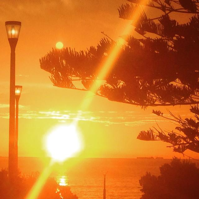 Summer evenings #Perth #summer #sunset #scarbs #orangesky #norfolkpines #perthlife